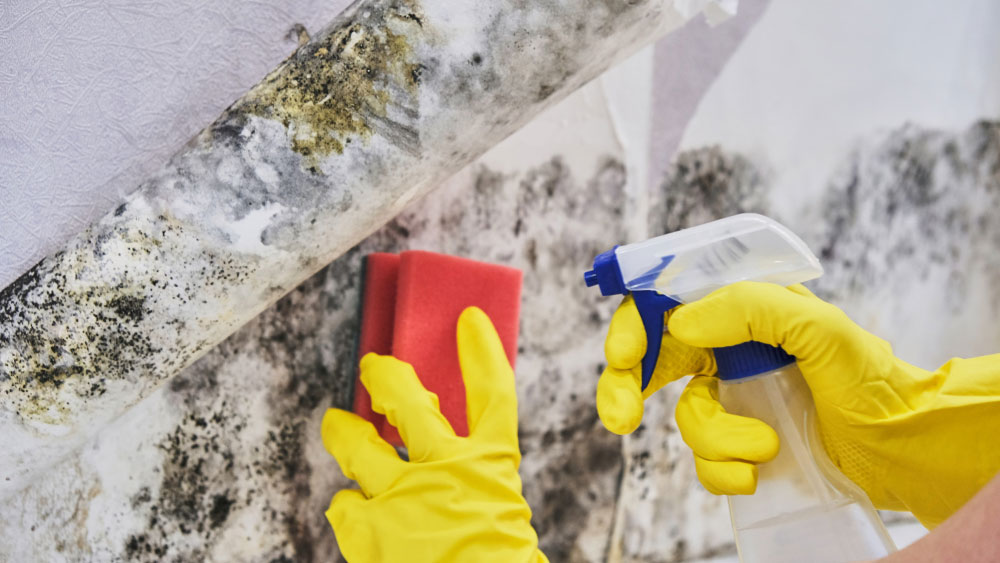 Mold Remediation in the wall